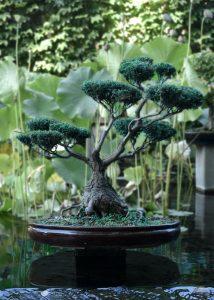 idée cadeau le bonsai
