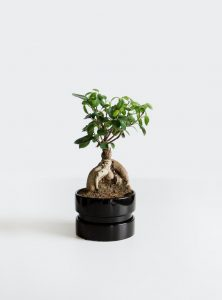 signification du bonsai